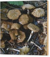 Wild Forest Mushroom Patch Wood Print