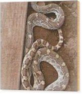 Wild Friendly Gopher Snake Wood Print