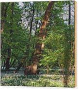 Wild Garlic  Wood Print by Tomasz Dziubinski
