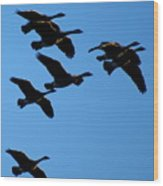 Wild Geese In The West Wood Print