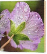 Wild Geranium After The Rain Wood Print