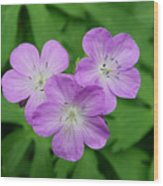 Wild Geranium Triplet  Wood Print