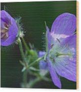 Wild Geraniums Wood Print