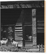 Wild Goats Ghost Town White Oaks New Mexico 1968 Wood Print