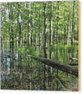 Wild Goose Woods Pond II Wood Print