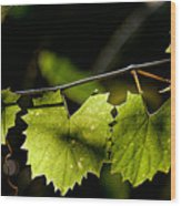 Wild Grape Leaves Wood Print
