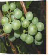 Wild Grapes In August Wood Print