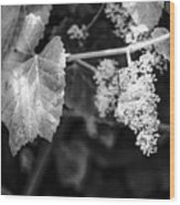 Wild Grapes In Light 2 Wood Print