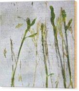 Wild Grass 2 Wood Print