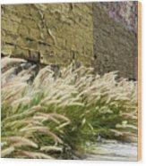 Wild Grass Along An Alley Wall Wood Print