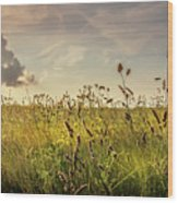 Wild Grass And A Lonely Cloud Wood Print