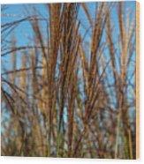 Wild Grass Wood Print