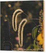 Wild Grass Glow Wood Print