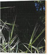 Wild Grass In The Sunlight Wood Print