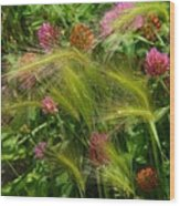 Wild Grasses And Red Clover Wood Print