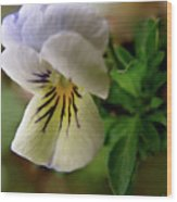Wild Ground Flowers Wood Print
