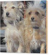Wild Hair Dogs Wood Print