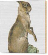 Wild Hare Wood Print
