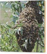 Wild Honey Bees Wood Print