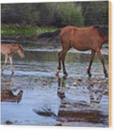 Wild Horse And Foal Cross Salt River Wood Print