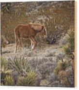 Wild Horse At Cold Creek Wood Print