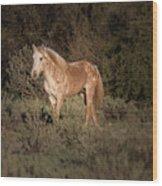 Wild Horse At Sunset Wood Print