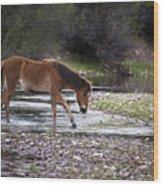 Wild Horse Crosses Salt River Wood Print