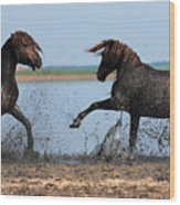 Wild Horse Fight Wood Print