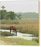 Wild Horse In Saltmarsh Wood Print