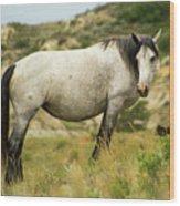 Wild Horse Wood Print