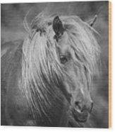 Wild Horse Of Assateague Wood Print