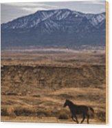 Wild Horse On The Run Wood Print
