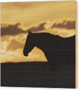 Wild Horse Sunrise Wood Print
