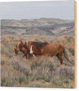 Wild Horse Trio Wood Print