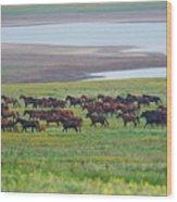 Wild Horses #34 Wood Print