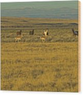 Wild Horses And Antelope-signed-#2216 Wood Print