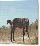 Wild Horses Desert Of Mexico Wood Print