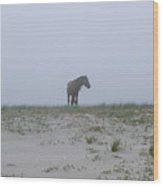 Wild Horses In The Sand Dunes On Sable Wood Print