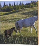Wild Horses Near Glacier National Park Wood Print