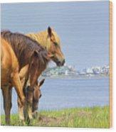 Wild Horses Of Assateaque Wood Print