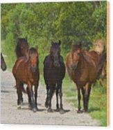 Wild Horses Of Corolla Wood Print