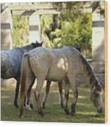 Wild Horses Of Cumberland Wood Print