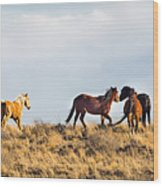 Wild Horses On The Bisti Wood Print