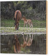 Wild Horses Reflected In The Salt River Wood Print