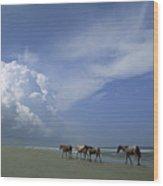 Wild Horses Roaming A Georgia Coast Wood Print by Michael Melford
