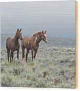 Wild Horses - Steens 1 Rw Wood Print