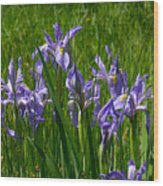 Wild Iris 1 Wood Print