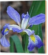 Wild Iris 3 Wood Print
