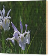 Wild Iris 4 Wood Print