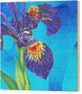 Wild Iris Art By Sharon Cummings Wood Print